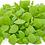 Thumbnail: Basil Microgreens