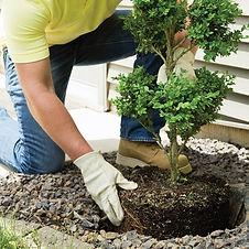 web_planting-shrub.jpg