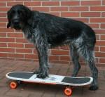 tricktreff-skateboard.jpg
