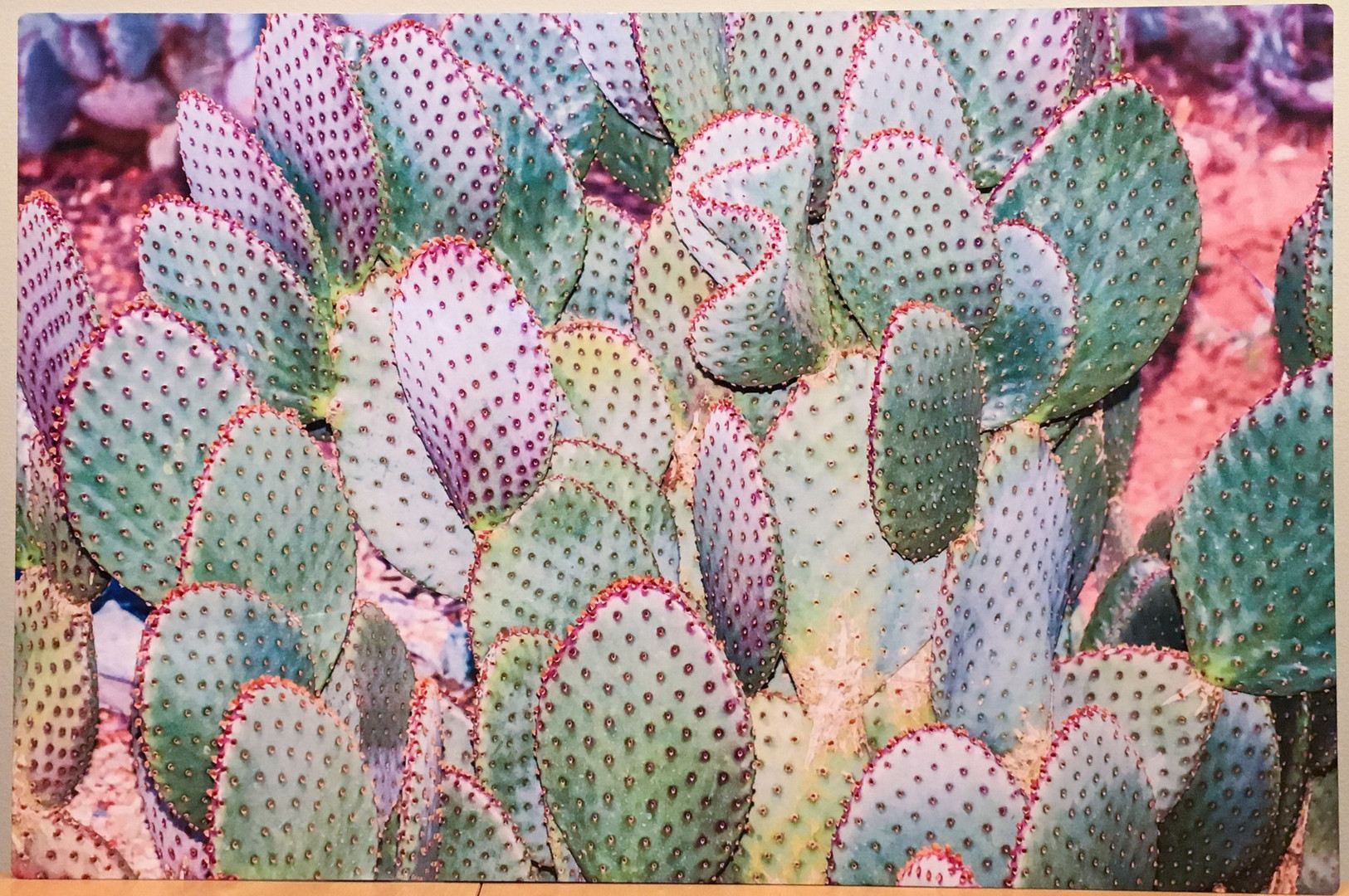 Karen Stephenson-2Prickly Pear With Purp