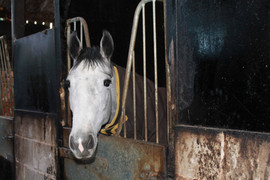 2 year old filly