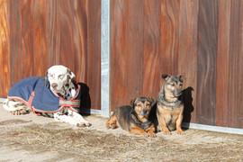 Dogs enjoying the sunshine