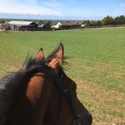 Tanasoq enjoying the view
