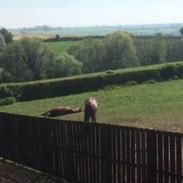 Horses chilling