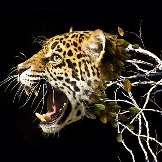 Anúncio em Revista - Dia de Proteção às Florestas