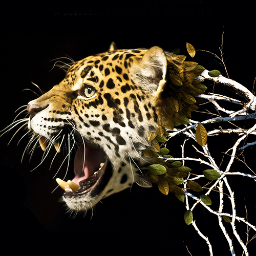 Anúncio em Revista Sinsaúde - Dia Proteção às Florestas