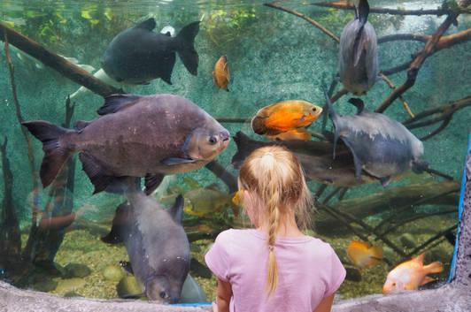 girl looking at amazon river fish.jpg