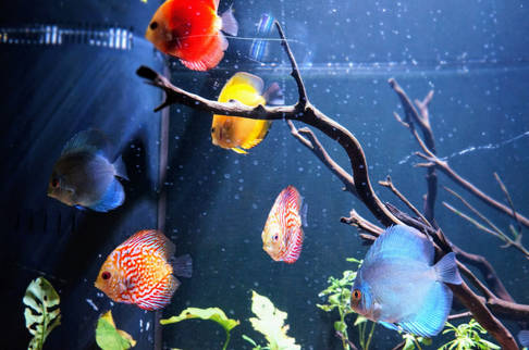 Fresh Water Fish East Idaho Aquarium