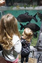 East Idaho Aquarium