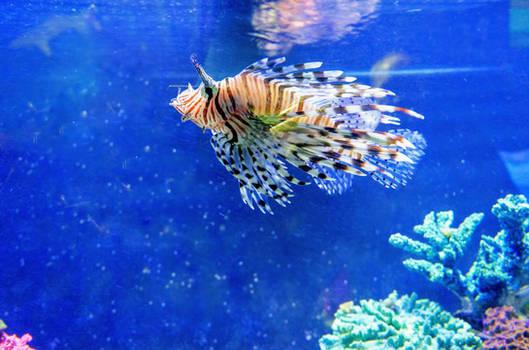 East Idaho Aquarium Lion Fish