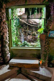 caiman exhibit.jpg