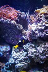 Sea Fish East Idaho Aquarium