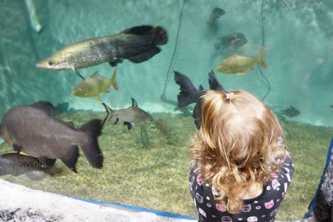 Watch the River Giants East Idaho Aquarium