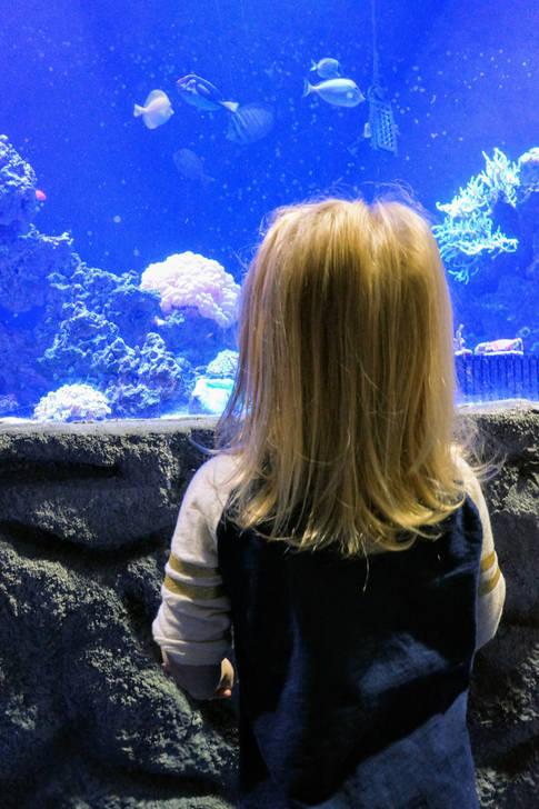 Watch the fish at the East Idaho Aquarium