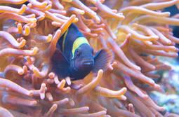 fish hiding