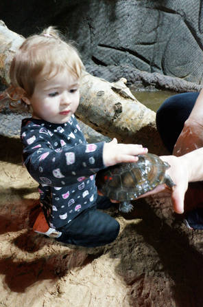 Touch a Turtle