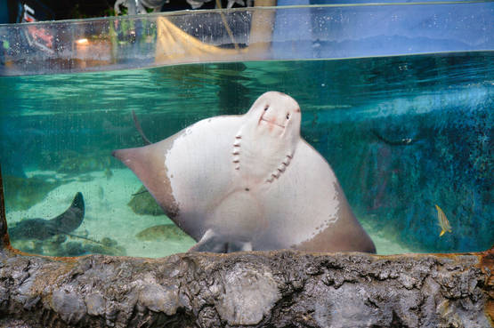 ray against the glass.jpg