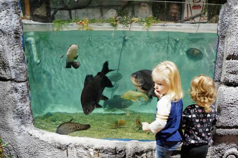 River Giants East Idaho Aquarium