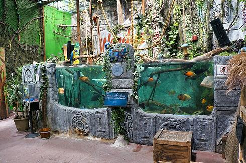 amazon fish exhibit.jpg