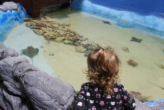 Touch the Rays at East Idaho Aquarium