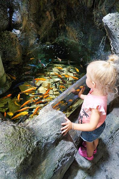 girl looking at school of fish.jpg
