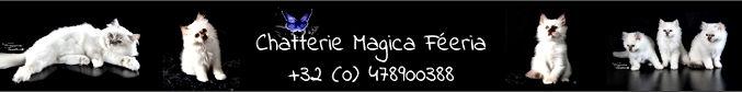 Chatterie Magica Féeria / Birman Breeder / Deux-Acren (Belgium)