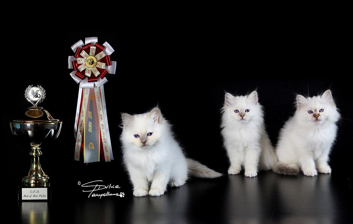 Best of best breed Magica Féeria