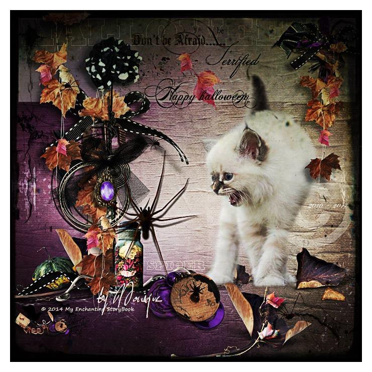 'Wow .... cats & spiders @ Halloween