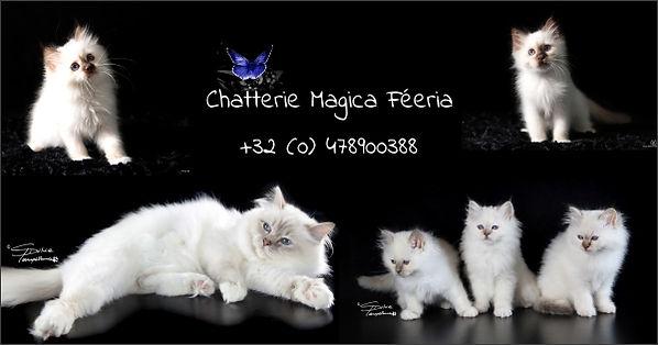 Bannière Chatterie Magica Féeria Maxi