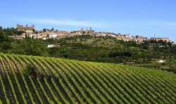 vigne Montalcino