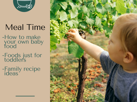 Making Your Own Baby Food Plus Toddler and Family Recipes
