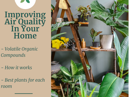 Improve the Air Quality in Your Home With House Plants