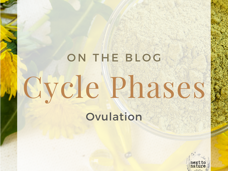 The Cycle Phases: Ovulation