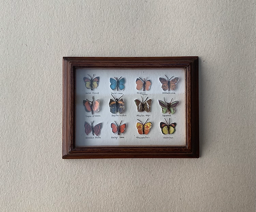 Collection of Butterflies in Polished Frame