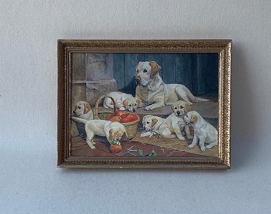 Framed Print -Labradors