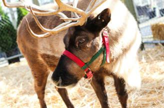 Santa's Reindeer at Watsons