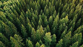 hero-aerial-forest-evergreen-trees.jpg