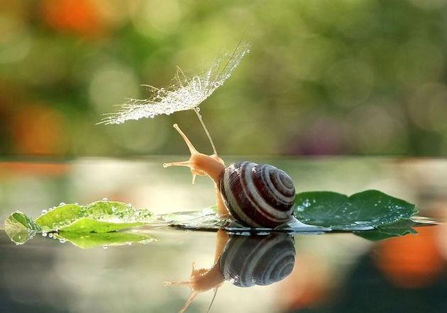virtual prayer room snail.jpg