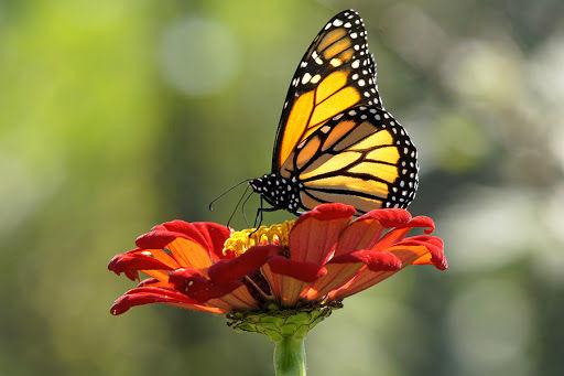 virtual prayer room butterfly.jpg
