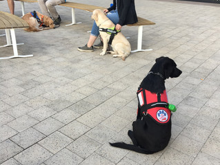 Public Trained Dog