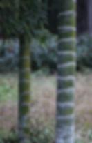 anji 4.jpg
