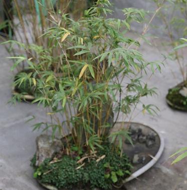 chengdu 3.JPG