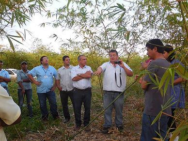 Field consultancy in Brazil