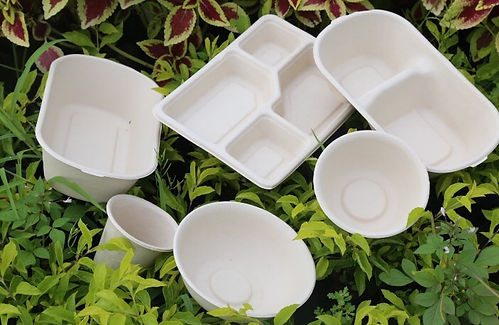 disposable food containers.jpeg