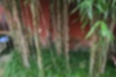 Chengdu 4.JPG