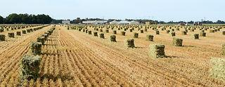 YH haystacks 1-2.jpg