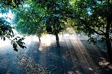 YH Walnut Harvest 14.jpg