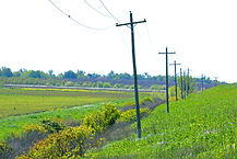 YH Rural road 3.jpg