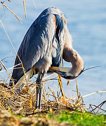 Yvonne Hunter_Yolo Bypass Wildlife Area_