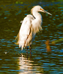 Yvonne_Hunter_Yolo Basin Wildlife Area_E